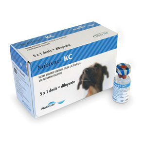 vacuna giardia y bőrdetella
